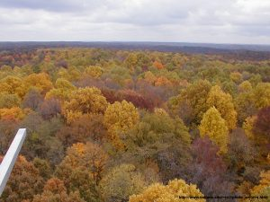 October 2002, Morgan Monroe State Forest