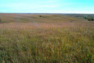 Rannells Flint Hills Prairie Fieldsite