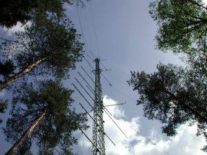 Norunda forest
