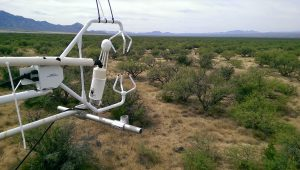 Instrument on Santa Rita Mesquite (Photo by Russell Scott)