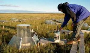 Imnavait International Tundra Experiment